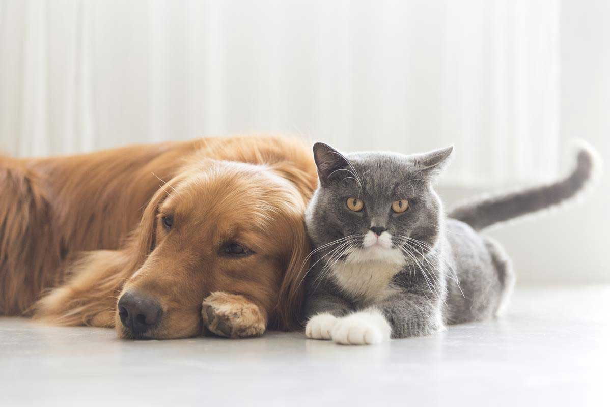 about our veterinary practice Arlington, WA