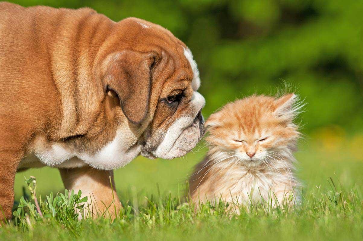Puppy & Kitten Care Arlington, WA