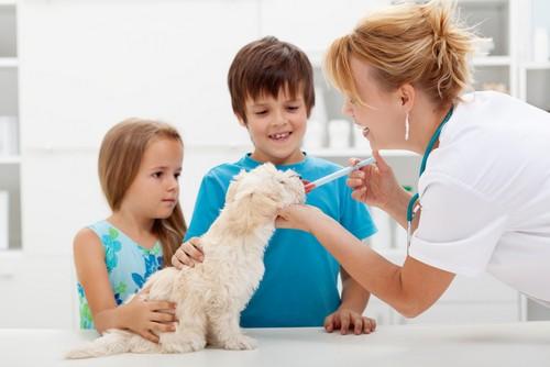 Vaccinations Arlington, WA